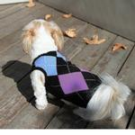 View Image 1 of Argyle Sleeveless Dog Sweater by Gooby - Blue
