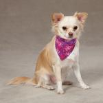View Image 1 of Aria Carolina Collection Dog Bandana - Raspberry