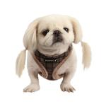 View Image 1 of Barron Dog Harness by Puppia - Gray