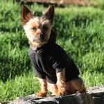View Image 2 of Basic Dog Hoodie - Jet Black