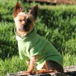 View Image 2 of Basic Dog Hoodie - Parrot Green