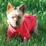View Image 2 of Basic Dog Hoodie - Tomato Red