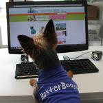View Image 4 of BaxterBoo Dog T-Shirt - Blue