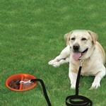 View Image 2 of Better Tether Dog Bowl Combo