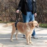 View Image 2 of CareLift Pet Lifting Harness - Rear Only