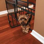 View Image 7 of Carlson Design Studio Expandable Dog Gate with Small Pet Door