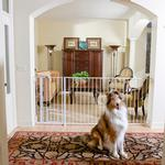 View Image 2 of Carlson Maxi Walk-Thru Dog Gate with Pet Door