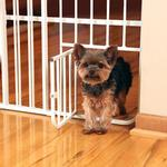 View Image 4 of Carlson Tuffy Expandable Dog Gate with Small Pet Door
