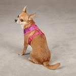 View Image 2 of Carolina Collection Dog Harness - Raspberry