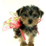 View Image 2 of Casual Canine Hawaiian Breeze Dog Dress