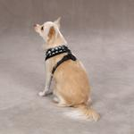 View Image 3 of Casual Canine Skull & Crossbone Harness - Black