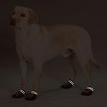 View Image 2 of Casual Canine X-Treme Weather Dog Boots