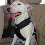 View Image 1 of Clickit Utilty Dog Harness by Sleepypod - Jet Black
