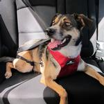 View Image 1 of Clickit Utilty Dog Harness by Sleepypod - Strawberry Red
