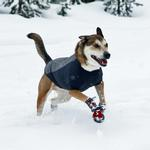 View Image 1 of Cloud Chaser Soft Shell Dog Jacket by RuffWear - Granite Gray