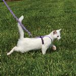 View Image 3 of Come with Me Kitty Harness & Bungee Leash - Lilac