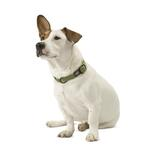 View Image 2 of Cozy Hemp Collar by Planet Dog - Apple Green