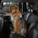 View Image 1 of Cruising Companion Car Harness - Light Blue