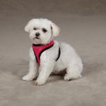 View Image 2 of Dimple Plush Dog Harness - Raspberry