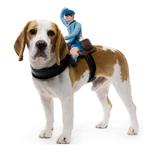 View Image 1 of Dog Riders Harness Halloween Costume - Mailman