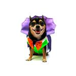 View Image 1 of Dogula Halloween Dog Costume