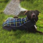 View Image 2 of Double Diamond Dog Coat - RC Plaid