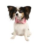 View Image 1 of Dreamy Neckguard Dog Collar by Pinkaholic - Pink