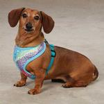 View Image 1 of East Side Collection Confetti Print Dog Harness - Bluebird
