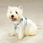 View Image 1 of East Side Collection Fashion Dog Harness - Blue Blossoms