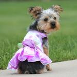 View Image 2 of Elegance Rosette Dog Dress by East Side Collection - Purple