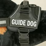 View Image 1 of EzyDog Custom Side Patches for Convert Harness - Guide Dog