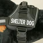 View Image 1 of EzyDog Custom Side Patches for Convert Harness - Shelter Dog