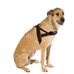 EzyDog Quick Fit Dog Harness - Black