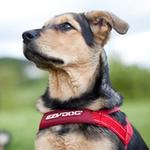 View Image 2 of EzyDog Quick Fit Dog Harness - Red