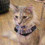 View Image 1 of Felix Cat Collar Scarf by Catspia - Navy