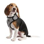 View Image 1 of Frontier Superior Dog Harness by Puppia - Black