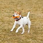 View Image 2 of Gourdo Interactive Dog Toy by RuffWear