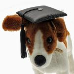 View Image 1 of Graduation Cap Dog Hat