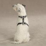 View Image 1 of Guardian Gear Camo Dog Harness - Black