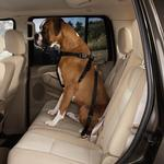 View Image 2 of Guardian Gear Dog Safety Car Harness - Black