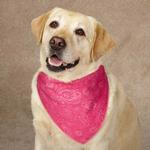 View Image 1 of Guardian Gear Insect Shield Paisley Dog Bandana - Pink