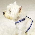 View Image 1 of Guardian Gear Two Tone Pawprint Harness - Blue