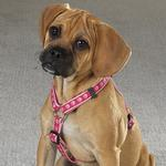 View Image 1 of Guardian Gear Two Tone Pawprint Harness - Pink