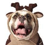 View Image 1 of Handmade Moosey Wool Dog Hoodie