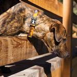 Hoopie Dog Collar by RuffWear - Teton
