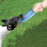 View Image 2 of Hydro Saucer Dog Toy