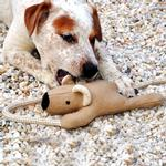 View Image 1 of Koala Bear with Rope Dog Toy