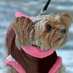 View Image 7 of Kumfy Tailz Cools & Warms Winter Dog Coat - Brown with Pink