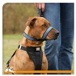 View Image 1 of Kurgo Dog Snout About Strap - Costal Blue