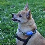View Image 2 of MagicLatch Dog Leash Connection System - Blue